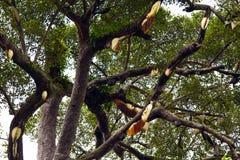 Wild bikupa i tropisk skog Royaltyfri Fotografi