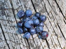 Wild bilberries on wood Stock Images