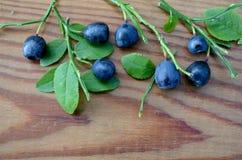 Wild bilberry on Desk Stock Photo