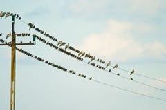 Wild bird. Flying wild birds in the sky near a small lake royalty free stock photography