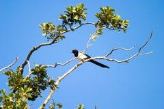Wild bird. Flighting wild birds on sky near samall lake royalty free stock image