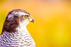 Wild bird. Wild hunter bird on meadow royalty free stock photo