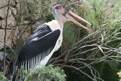 Wild bird Stock Images