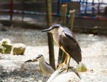 Wild bird Royalty Free Stock Photography
