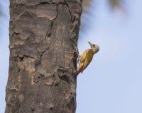 Wild bird stock photo