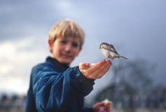 Wild bird on boys hand Stock Photos