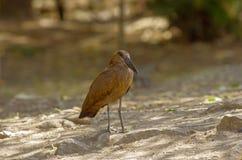 Wild bird close to the lake in Ethiopia, February 2019 stock photography