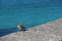 Wild bird eating insect at the sea stock images