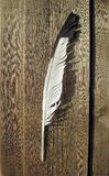 Wild bird feather Stock Images