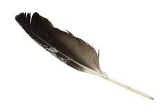 Wild Bird Feather Top Stock Image