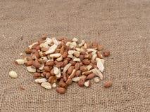 Wild bird food - unsalted peanuts, on hessian. Help feed garden birds wildlife in winter. Wild bird food - unsalted peanuts, on hessian. Help feed garden birds stock photos