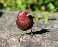 Wild bird on ground Royalty Free Stock Photos