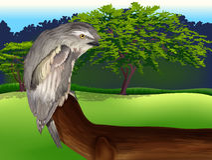 Wild Bird Royalty Free Stock Photos