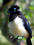 Wild bird Royalty Free Stock Photo