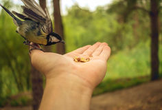 Wild bird landed on the palm to eat on the summer blurred backg Stock Image