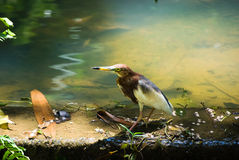 Wild bird in a natural environment Royalty Free Stock Photo