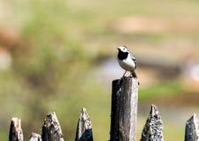Wild bird in nature outdoor Stock Photo