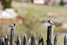Wild bird in nature outdoor Stock Photos