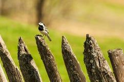 Wild bird in nature outdoor Stock Image