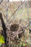 Wild bird nest in the forest Royalty Free Stock Image