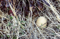 Wild Bird Nest. On Ground Stock Image