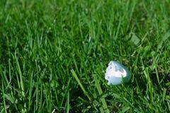 Wild bird's eggshell on grass Stock Images