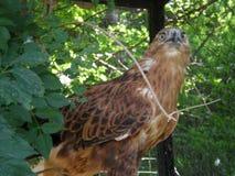 Wild bird sarich. In crimean zoo Tale Stock Photos