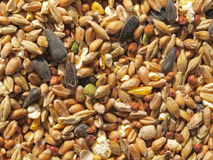 Wild bird seed. Food put out in a garden to feed wild birds in the winter Royalty Free Stock Image