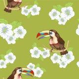 Wild bird Royalty Free Stock Image