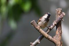 Wild bird on tree branches Royalty Free Stock Photo