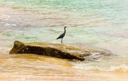 A wild bird in the windward islands Stock Photo