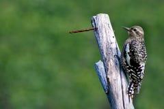 Wild bird on the wood Royalty Free Stock Photo