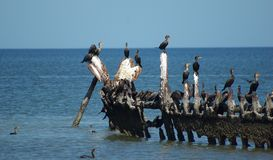 Wild Birds Royalty Free Stock Image