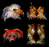 Wild birds and animals Stock Photos