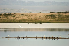 Wild birds at the banks of Lake Stock Photography