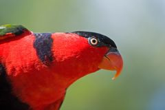 Wild Birds of Color Royalty Free Stock Photos