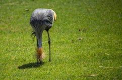 Wild Birds Stock Image