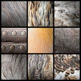Wild birds feathers collection. Real textures Stock Image