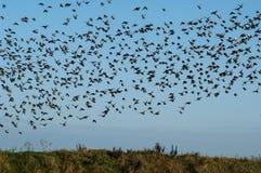 Wild birds in flight Stock Photography