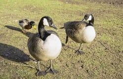 Wild birds Stock Photos