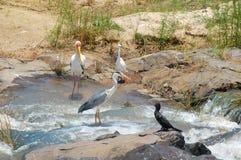 Wild birds royalty free stock photography