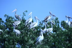 Wild birds at Phnom Tamao Zoo Royalty Free Stock Images