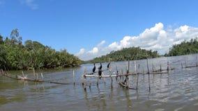 Wild birds on the Madu River. Sri Lanka stock video