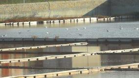 Wild birds in the museum of salt in Pomorie, Bulgaria stock video footage