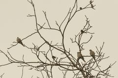 Wild birds perch on tree top branch. A winter landscape image of birds in a tree royalty free stock photography