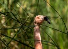 Wild Birds Royalty Free Stock Photos