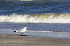 Wild birds on romanian beach Stock Photos