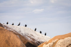 Wild birds. In a row on the Malawi lake coast Stock Photography