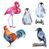 Wild Birds Set. Penguin, Crow, Flamingo, Cock. On White Background. Royalty Free Stock Photos