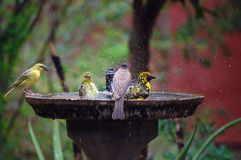 Wild birds in water Royalty Free Stock Photos